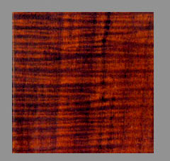 Maple Amber Color With Red Undertones Por 18th 20th Century American Stock When Used On Walnut Stocks Stain Has Stronger